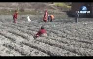 कृषिलाई प्राथमिकतामा राख्दै ३० अर्ब ५८ रुपैयाँको बजेट सिलिंग तोकियो
