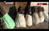मुगुमा स्याउका लाखौं विरुवा बाँडिएपनि उपलब्धि भने शून्य बन्दै - MAIN NEWS