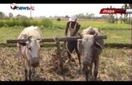 असारे चटारोमा चुनावको चटारो थपिएपछि झापाका किसानहरु अन्यौलमा - MAIN NEWS